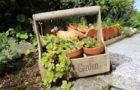 20 Regalos de jardinería para tu boda