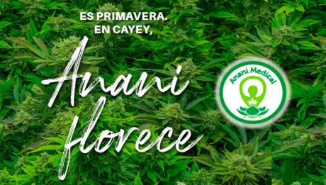 Anani cannabis medicinal