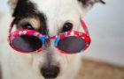 Cómo identificar problemas de comportamiento en tu perro