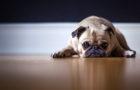 Soluciones a los problemas comunes de comportamiento de tu perro con el Dog Guru