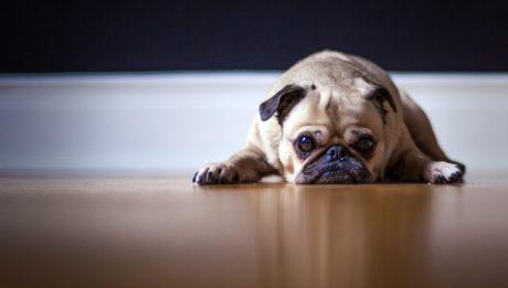 un perrito chango