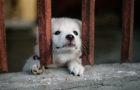 Te decimos cómo manejar el comportamiento de tu perro durante la época de cuarentena
