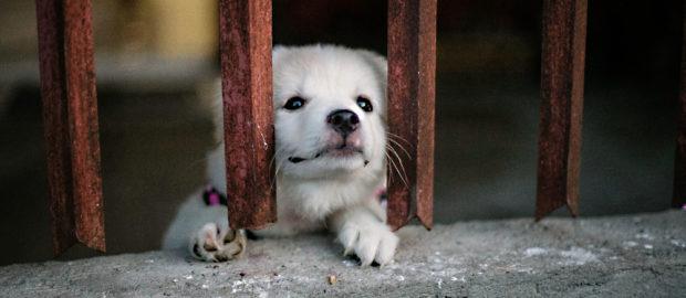 perrito encerrado en cuarentena