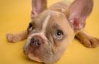 Respuestas a tus preguntas sobre cómo criar a tu perro