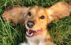 El Dog Guru responde tus preguntas sobre cómo criar a tu perro